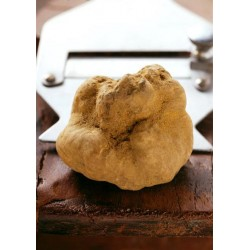 White truffle 100 gr. (Tuber magnatum Pico) - First choice