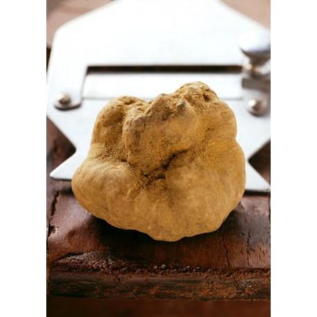 White truffle 100 gr. (Tuber magnatum Pico) - First choice