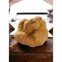 Truffe blanche fraîche 100 gr. (Tuber magnatum Pico) - Premier choix