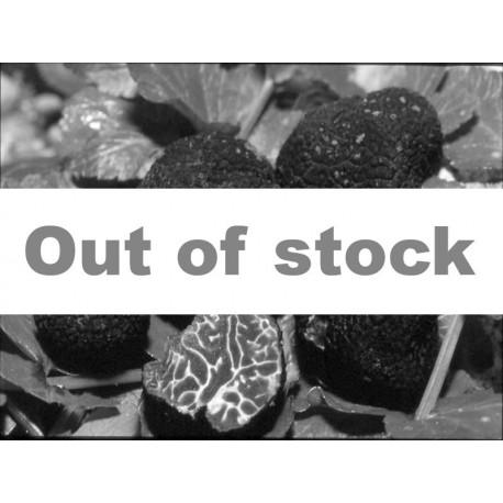 Fresh Brumale truffle