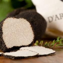 Truffe truffe d'été